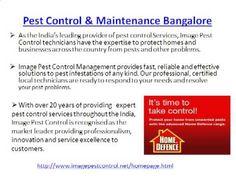 Pest Control Services Bangalore