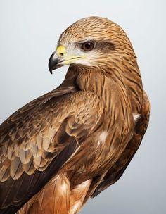 14 bird portraits by Leila Jeffreys