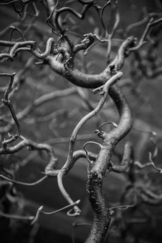 Black and white detail photograph of the gnarly and curly branches of a tree that looks like a universe unto itself. Organic Art, Old Building, Black And White Photography, Fine Art Paper, Monochrome, Art Pieces, Fine Art Prints, That Look, Museum