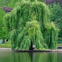 """Willow weep for me"" by Ann Ronell  piano by Juan Diaz by mojomalo on SoundCloud"