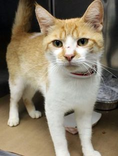 Sunny: Orange and white beauty is running out of time at high-kill SC shelter rescued by foster paws