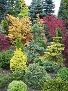 60 Beautiful Front Yards And Backyard Evergreen Garden Design Ideas - artmyideas Mailbox Landscaping, Privacy Landscaping, Garden Landscaping, Landscaping Ideas, Modern Landscaping, Garden Shrubs, Garden Trees, Shade Garden, Garden Plants