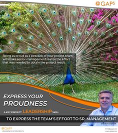 A key project leadership skill to express the project team's effort to senior management: Being as proud as a peacock of your project team will make senior management realize the efforts that were needed to obtain the desired project result. #AboutProjectManagement #PmPosters #ProjectManagement #Gaps #StevenGoeman