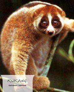 58 Gambar Flora Dan Fauna Indonesia Bagian Barat Terbaru