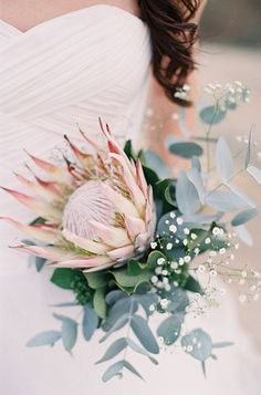 protea eucalyptus and babys breath wedding bouquet Flor Protea, Protea Bouquet, Protea Wedding, Floral Wedding, Wedding Bouquets, Wedding Flowers, Flower Bouquets, Baby's Breath Wedding Bouquet, Babies Breath