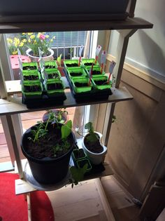 Homemade rack for seeds indoor - to be moved outside later on.. tomatoes top left, broccoli right, potatoes bottom left and beans right.