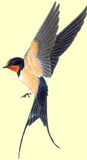 20 Ideas Tattoo Bird Swallow Inspiration For 2019 Swallow Bird Tattoos, Tattoo Bird, Barn Swallow Tattoo, Golondrinas Tattoo, Heide Park, Sparrow Tattoo, Desenho Tattoo, Bird Drawings, Watercolor Bird