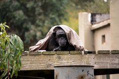 Peek-A-Boo! @ San Francisco Zoo
