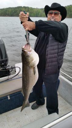 Trophy spring Lake Ouachita striper!