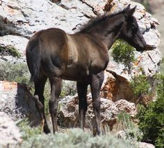 mountain baby Western Photography, Baby Horses, Western Art, Westerns, Cute, Mountain, Animals, Style, Swag