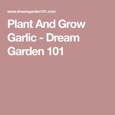 Plant And Grow Garlic - Dream Garden 101