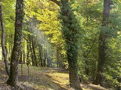 sportlich im Wald spazieren