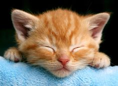 Tiny baby Nimbus. Could he be any cuter?