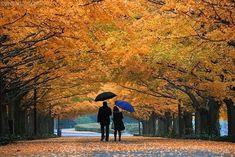 An autumn walk love couples trees autumn leaves