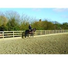 Outdoor Horse Arena Sand Good Footing Dry With Good