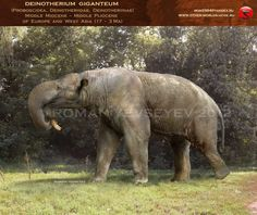Deinotherium giganteum - An ancestor of the elephant