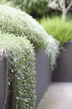 22 Beautiful Grasses Landscaping You Can Make Your Home Decoration -