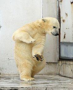 Dancing Polar Bear by Eva