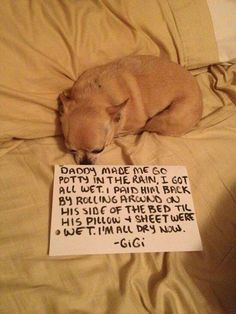 Fun Claw - Funny Cats, Funny Dogs, Funny Animals: Dog Shaming - 22 Pics