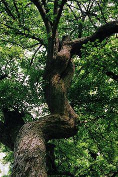 Copenhagen Tree Trunk (by ileum)