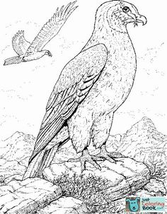 Realistic Bird Coloring Pages - Bing Images Owl Coloring Pages, Free Printable Coloring Pages, Coloring Sheets, Coloring Books, Free Printables, Colouring, Wolf Paw, Hawk Bird, Pictures To Draw