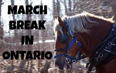 Free and discounted things to do in Ontario for March Break. Great list!