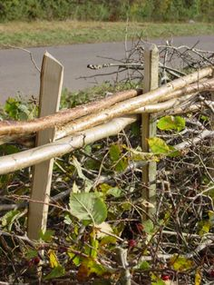 About Hedge Laying all about living fences- hedge laying society