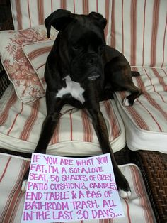 Ahahahahahha I could look at dog shaming pictures all day.