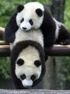 Wait Mom, I need more hugs......