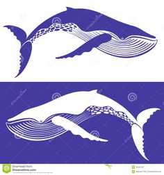whale illustration - Google Search