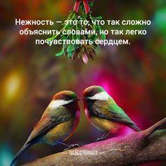 15:00 Нежность (фото — instagram.com/perfektnice) #нежность, #любовь, #сказка, #двое, #tbworker