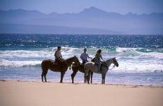 kurland-riding-on-beach African Safari, Homesteading, Camel, Villa, Horses, Gallery, Beach, Animals, Animales