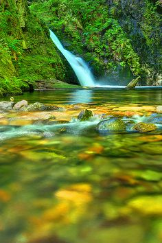 Goldstream Park, Vancouver Island, BC | by Ireena Eleonora Worthy, via Flickr