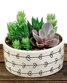 Cactus Arrangements - Love plants but not good at taking care of them? Lucky for you, cactus arrangements are back in style. Succulent Bowls, Succulent Arrangements, Succulent Terrarium, Cacti And Succulents, Planting Succulents, Garden Plants, Indoor Plants, Planting Flowers, Indoor Cactus