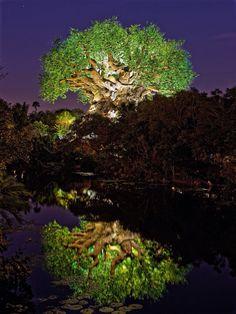 Disney World Animal Kingdom Tree of Life at night Disney World Vacation, Disney Parks, Walt Disney World, Disney Dream, Disney Magic, Disney Universal Studios, Animals Of The World, Travel And Leisure, Tree Of Life
