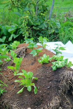 Hugelkultur garden bed. Learn how to make one.