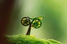 Y.IPdeer™ 20 Fotografías fenomenales que hay que ver para creer