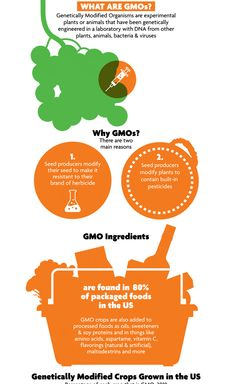 GMOs are plants or animals that have undergone a process wherein scientists alter their genes with DNA from different species of living organisms, bacteria, or viruses to get desired traits such as resistance to disease or tolerance of pesticides. Healthy Eating Habits, Healthy Life, Healthy Living, Health And Wellness, Health Fitness, Health Tips, Raw Food Recipes, Healthy Recipes, Take Care Of Your Body