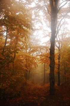 Autumn Forest ~ by electroboheme on Flickr