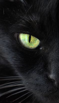 mostlycatsmostly:  Cat's Eye 1….green on black (by maxeythecat911)