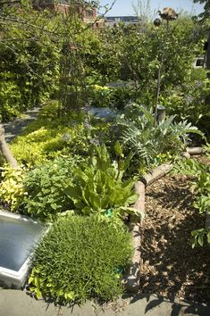 roof top forest style garden