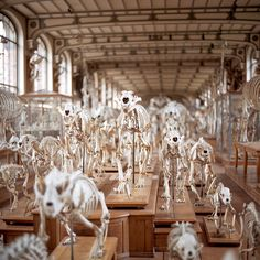 My favourite museum in Paris - Gallery of Palaeontology and Comparative Anatomy. It is situated in the Jardin des Plantes in Paris near the Gare d'Austerlitz.  It was the  creation of professors Albert Gaudry (Professor of Paleontology) and Georges Pouchet (Professor of Comparative Anatomy) who wished to preserve and present to the public collections of great historic and scientific importance.
