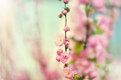 Blossom in pink by ~Strawberry-Mood on deviantART