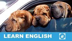 Angol kifejezések egy percben videó lecke. Nézzük meg, mit jelent ez az angol kifejezés: Back-Seat Driver, és hogyan használjuk a hétköznapi angol beszédben.