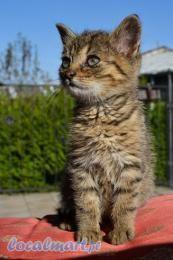 Oddam małego kotka w dobre ręce  http://dl.localmart.pl/swidnica/item/oddam_malego_kotka_w_dobre_rece/37536254