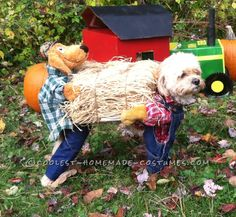 Scarecrow Dog Costume... Coolest Halloween Costume Contest