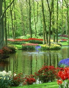 Keukenhof is the most beautiful spring garden in the world! It has more than 7 million tulips, daffodils and hyacinths, which are encompasse[d] in about 32 hectares.