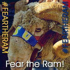 Fear the Ram! Go Angelo State University Rams! Sheep Puns, San Angelo, Alabama Crimson Tide, College Life, Dallas Cowboys, State University, Texas, Football, Memories