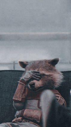 wallpaper marvel rocket raccoon wallpaper by xxtes - Marvel Avengers, Captain Marvel, Marvel Comics, Marvel Cartoons, Marvel Funny, Marvel Art, Marvel Memes, Avengers Memes, Rocket Raccoon