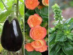 10 népszerű növény: ezek magját januárban vesd el! | Hobbikert Magazin Balcony Garden, Vegetables, Fruit, Vegetable Recipes, Balcony Gardening, Veggies